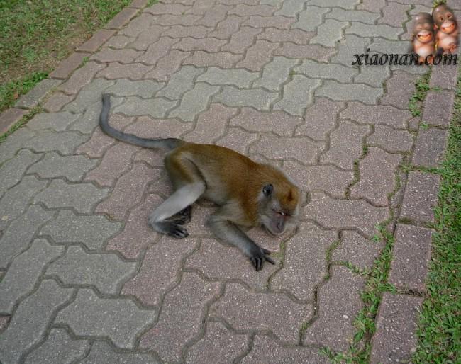 教小猴子摘果子_乐乐简笔画